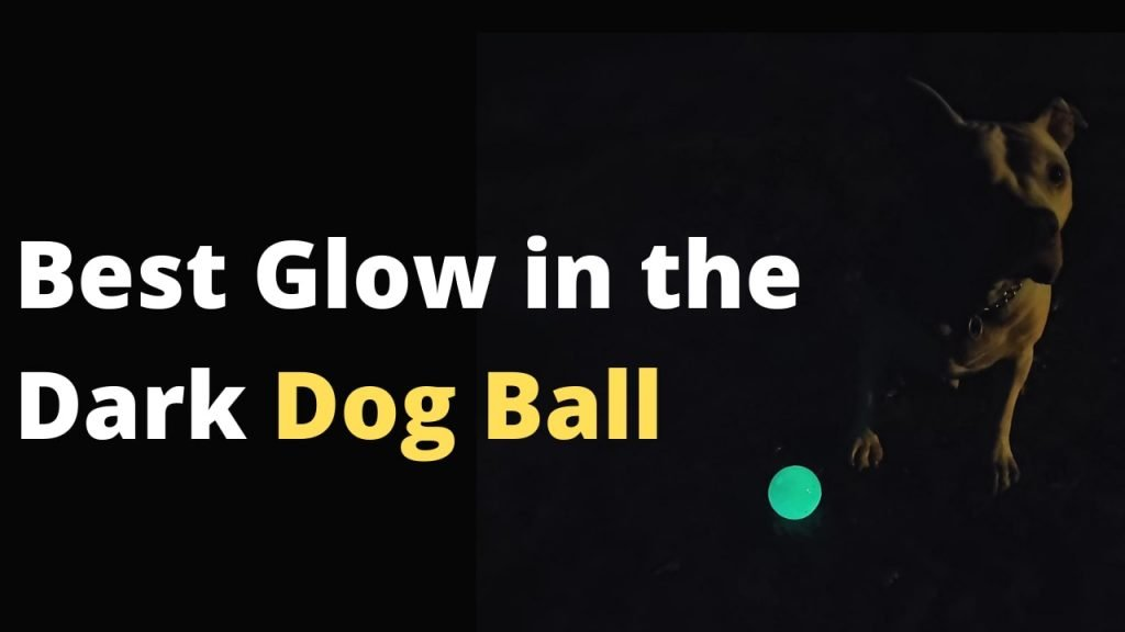Best Glow In The Dark Dog Ball you can get in the market right now that'll make your puppy excited and want to fetch now