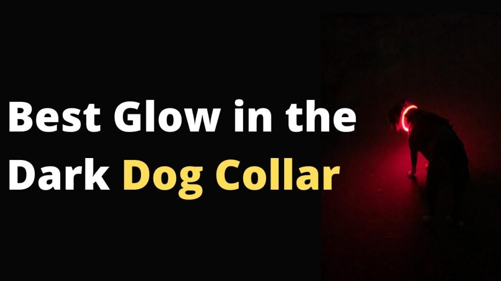 Best Glow in the Dark Dog Collar for making your dog glow in the dark